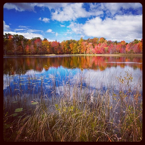 Fall colors on full display in #puremichigan: Michigans Seasons, Favorite Places, Beautiful Michigan, Fall Colors, Full Display, Beautiful Places, Puremichigan, Michigan Seasons