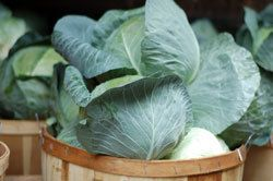 A Guide to Freezing Cabbage. Cabbage can be brined as sauerkraut or made into coleslaw or relishes and frozen. Whole leaves can be frozen unblanched for use as wrappers for baking or stuffing, and used immediately after thawing. Cabbages should not be frozen whole.