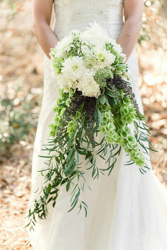 An Amazing Cascade Bridal Bouquet: White Dahlias, White Sweet Pea, White Football Mums, Green Bells Of Ireland + Several Additional Varieties Of Greenery/Foliage