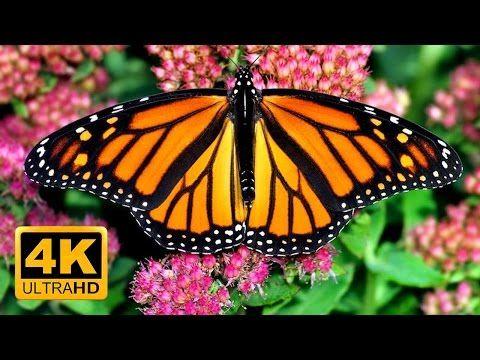 Den bästa avlappnande trädgården i 4K - fjärilar, fåglar och blommor - 2 timmar - skärmsläckare i 4K - YouTube
