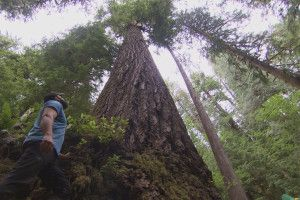 Trek The Spectacular Wallowa Mountains With Legendary Mule Packer . TV   OPB