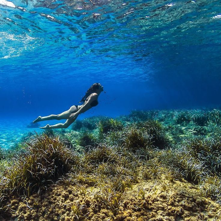 Searching for freedom  #vittoriogreggio #underwater #sardegna #lovetheocean #whatmakestheocean