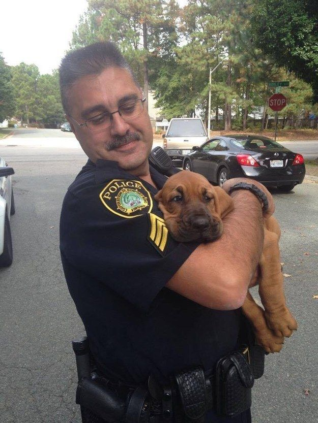 This police puppy at her first day of work. | The 37 Cutest Baby Animal Photos Of 2014
