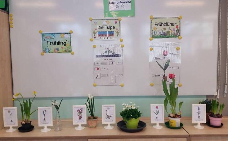 Auch bei uns herrscht Frühling ⚘ #grundschule#grundschulmaterial#frühling#