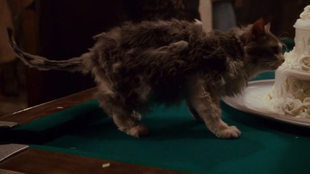A cat named Fuzz (played by cat actor Trapper) who was supposedly blown up (implied Kitty Carnage Warning) shows up in the final shot of the comedy film Sweet Home Alabama (2002).