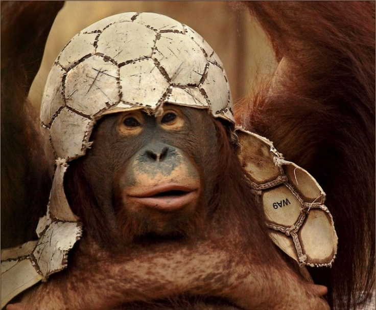 orang. with soccer ball hat
