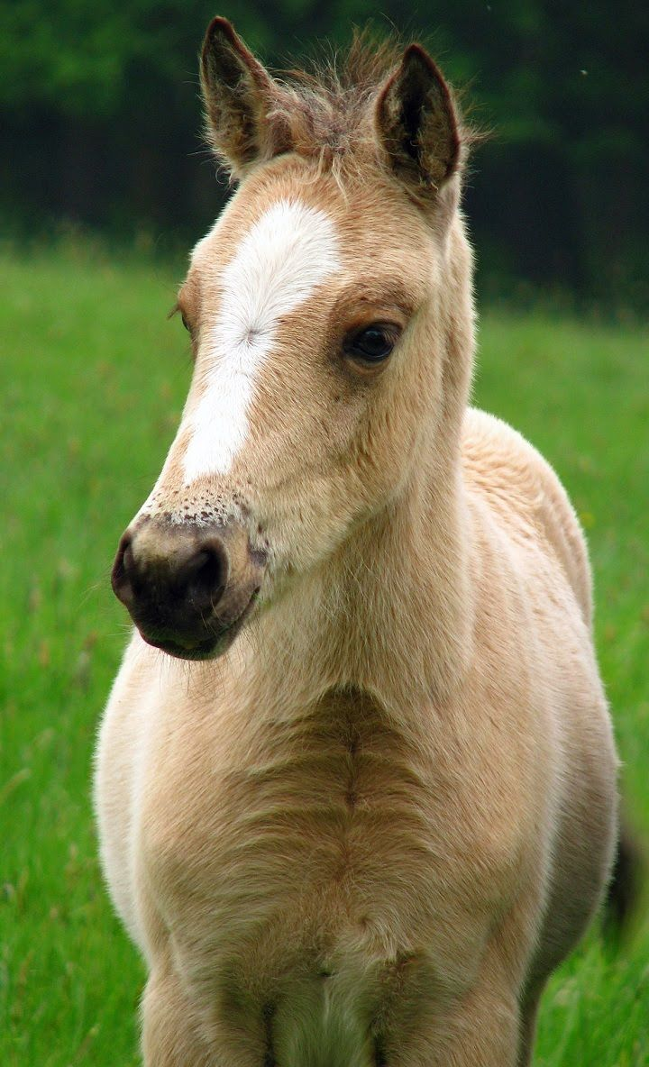 Cute Baby Horse Wallpaper For Your Phone Android Apps Pinterest