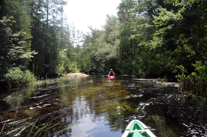 17 best images about the pine barrens on pinterest for Oswego river fishing