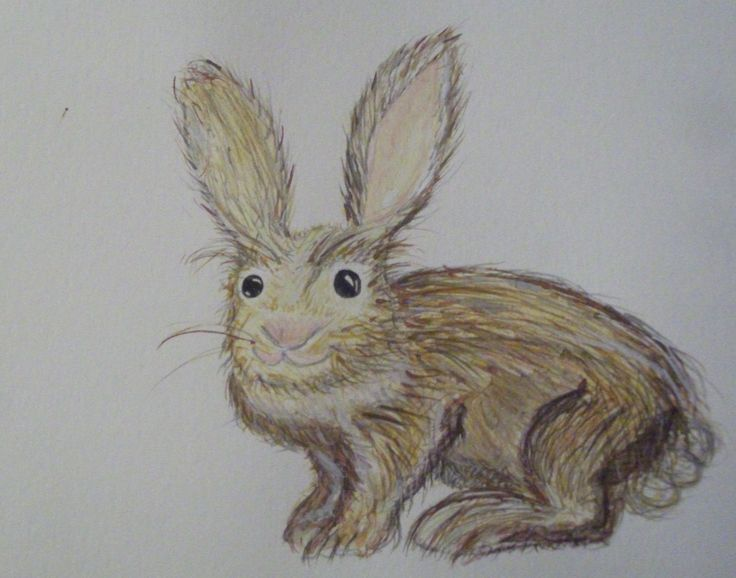 Bunny - water colour pencil and paints