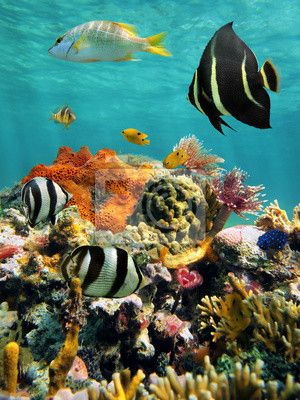 Sticker Coral reef and tropical fish with water surface