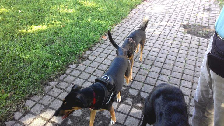 16/08/2015 - Torino con Iride e Peja
