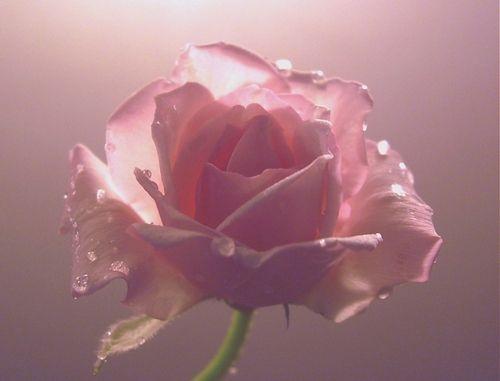 Комплексная арттерапия. Розовый цвет
