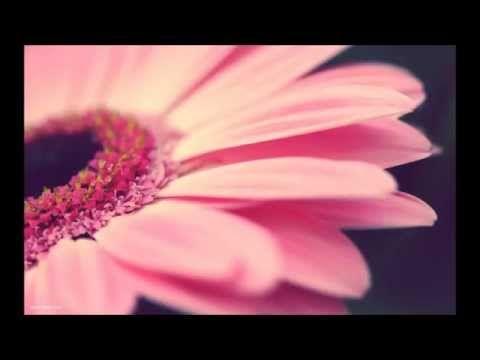 Meditace pro pozitivní myšlenky s Robertem Reevesem - YouTube