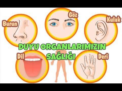 #DuyuOrganlarımızınSağlığı #duyuorganlarımız #fenbilimleri