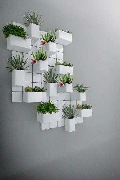 Cactus en las paredes