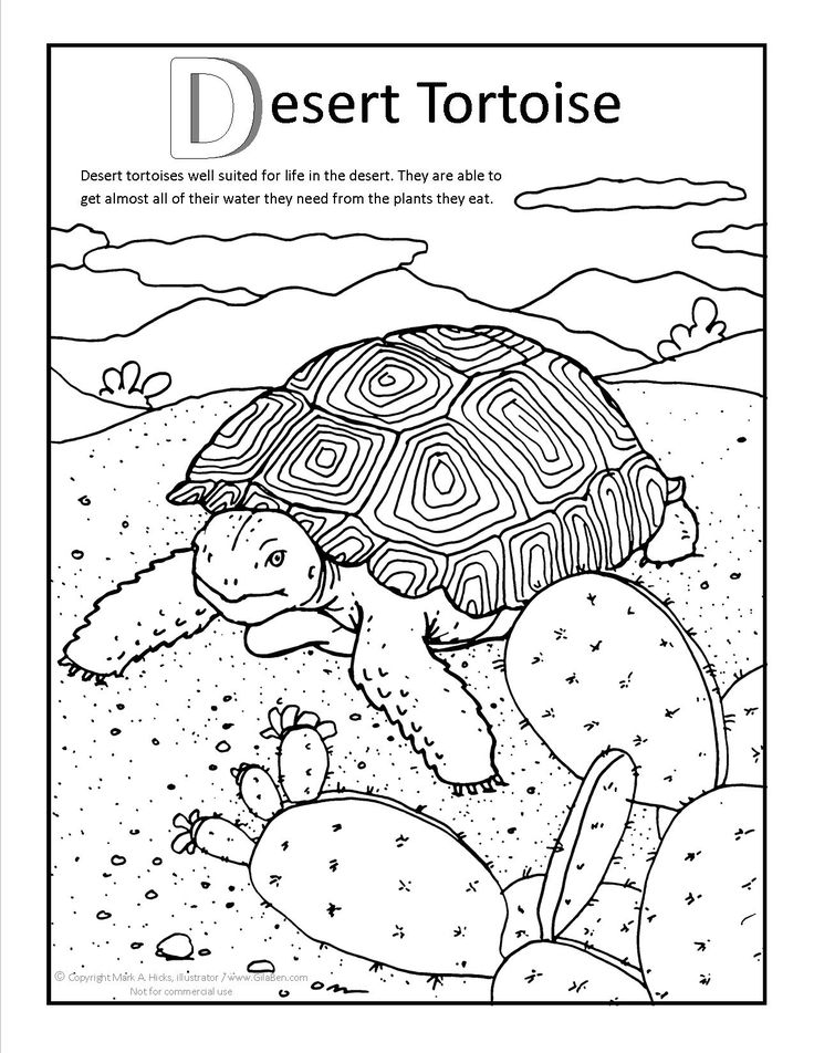 Desert Tortoise Coloring page at GilaBen.com