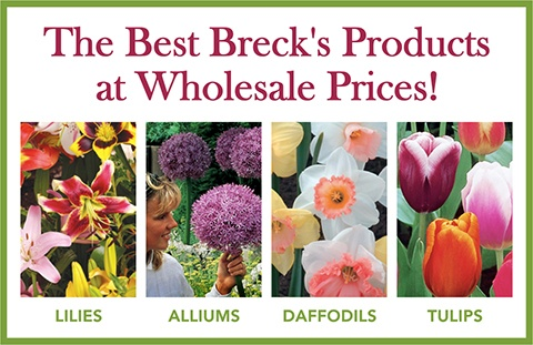 Bulbs from Breck's Wholesale