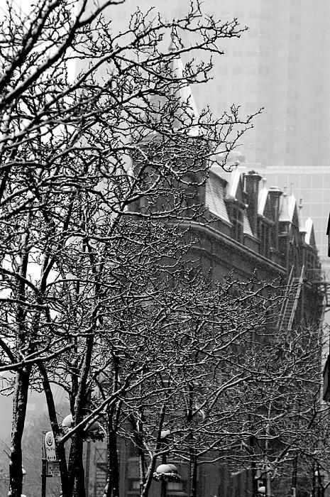 "A snowy January morning brought me out to shoot Toronto's ""Flatiron"" building. I wanted to shoot it in an unconventional way, if I could. I like this view from the north side of Front Street where a row of snow covered trees partially obstructs the view of the building, yet it remains immediately recognizable. #Toronto, #flatiron, #snow"