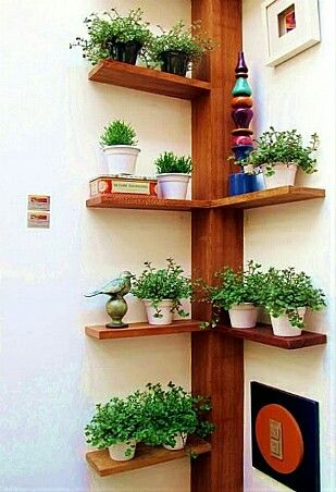 Hermosa decoración para crear una huerta en casa.