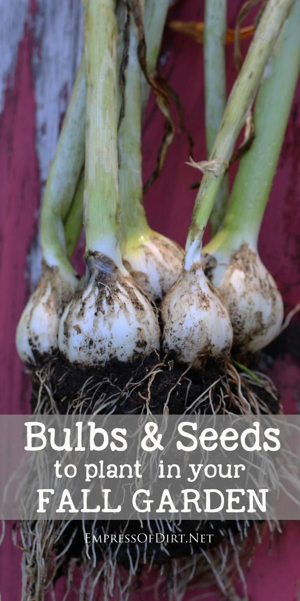There are many bulbs and seeds that grow best when planted in the fall right before the cold winter weather sets in. Come see what you can do now for your garden!: