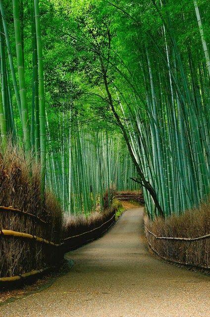 Arashiyama,+Kyoto,+Japan.jpg 424×640ピクセル
