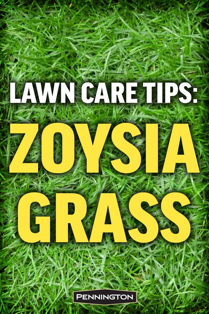 Zoysia Grass Is Known For Its Ability To Stand Up To Heat Drought Heavy Foot Traffic And A Variety Of Other Challen Zoysia Grass Zoysia Grass Care Grass Care