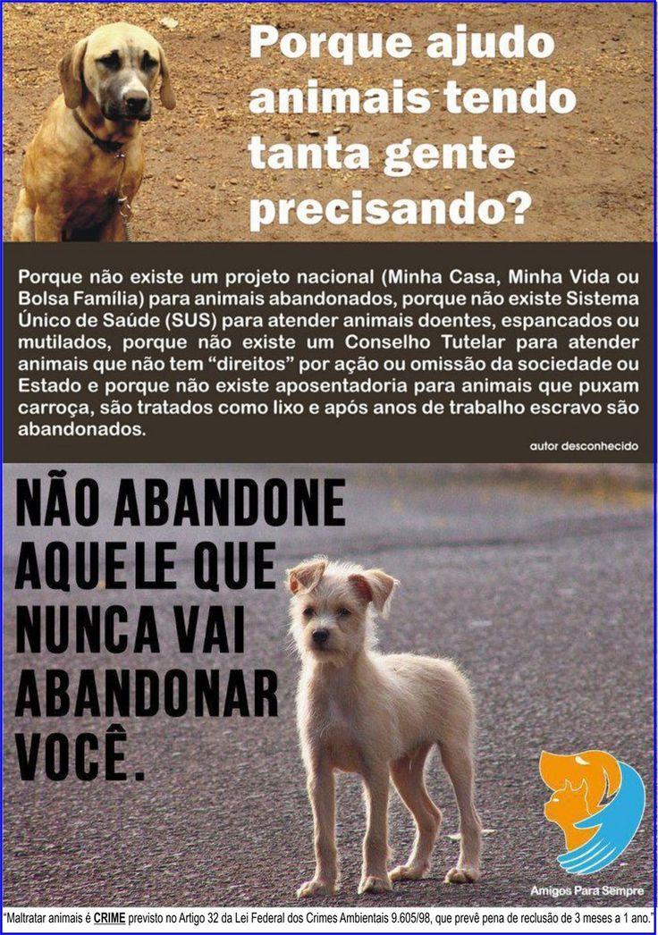 """""""PORQUE AJUDO TANTO OS ANIMAIS"""""""