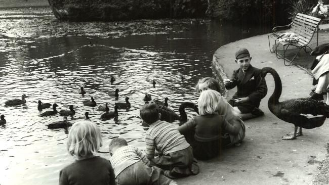 1953: Children feed swans at the Royal Botanic Gardens Melbourne. Picture: Herald Sun Image Library