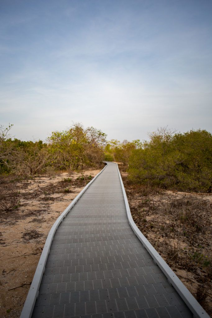 Mangrove Walks at East Point Darwin