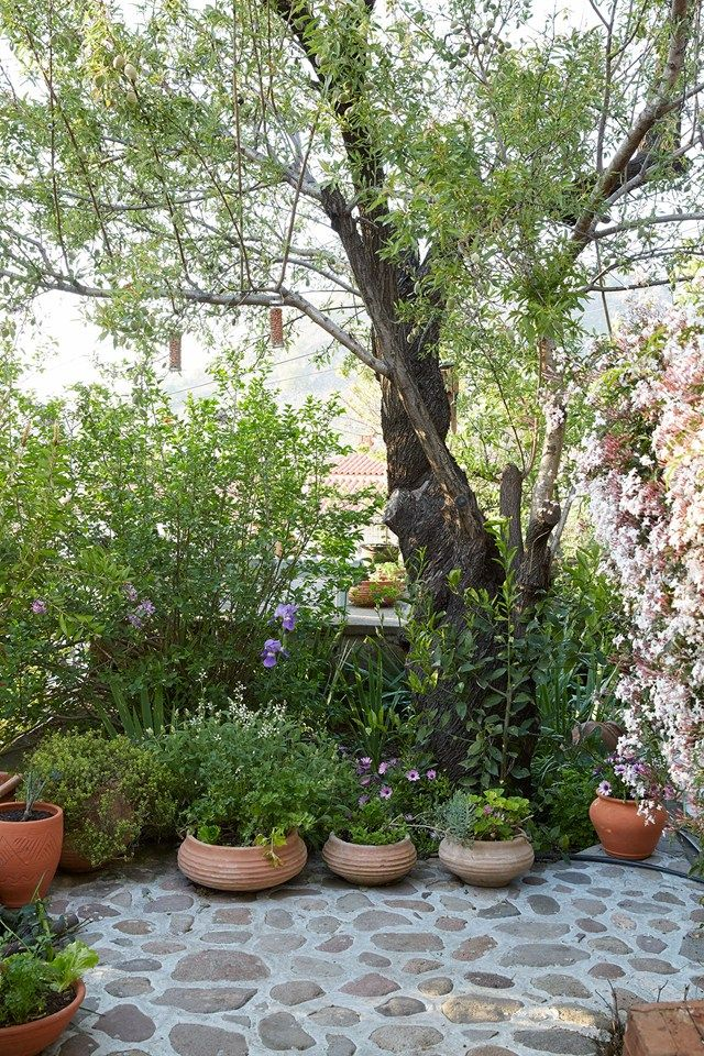 Discover author Claire Lloyd's beautiful house and garden on the island of Lesvos on HOUSE - design, food and travel by House & Garden.