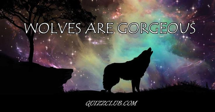 12 scientific facts about wolves you may have never heard before #Wolves #Animals #Facts