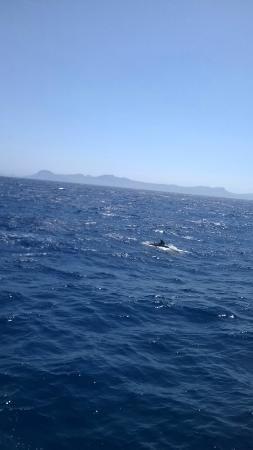 Foto de Cruceros Brisa - Transportes Maritimos