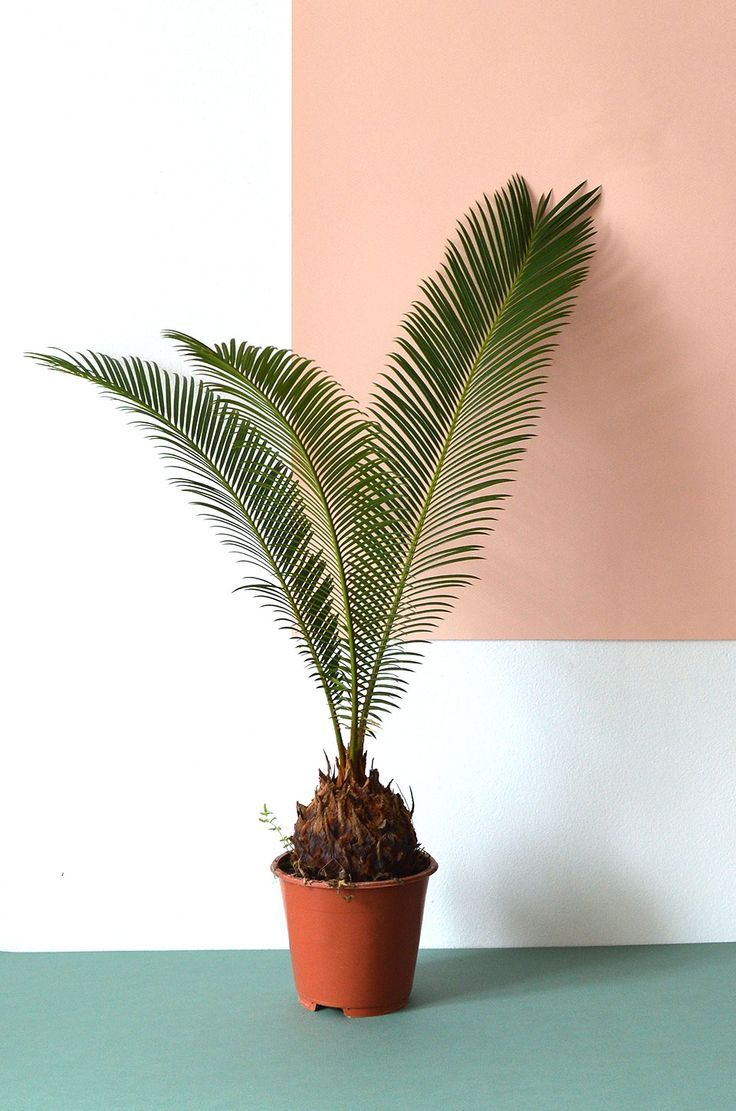 Urban Jungle Bloggers: #plantcolorpop by @Hannhouse