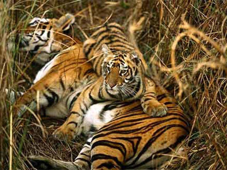 Phansad Wildlife Sanctuary - in Maharashtra, India