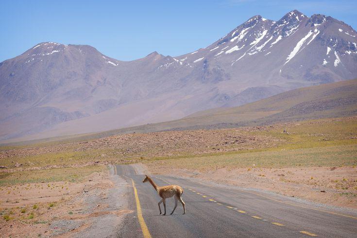 Atacama, Chile  Atacaman maaperä on paikoin täysin elotonta. Useimmiten kivikosta kuitenkin törröttää piikikkäitä heiniä ja pensaita,  http://www.exploras.net/matkablogi/11122015-2