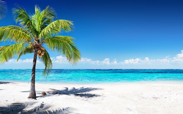 Download wallpapers coconuts on palm tree, tropical island, travel concepts, summer, ocean, blue lagoon, azure, beach, sand, waves, palm