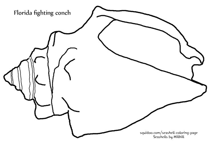 sea shell drawings | Fighting Conch Seashell Coloring Page