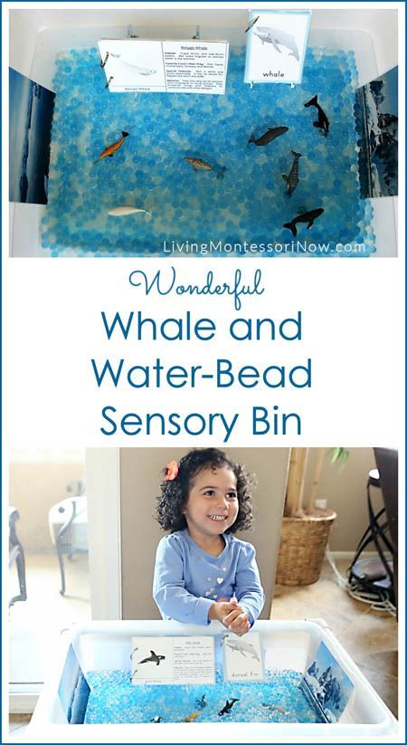"""This """"W is for wonderful whale and water-bead sensory bin,"""" is part of the A-Z of Animals Series. Post includes links to free printables & a YouTube video, too."""