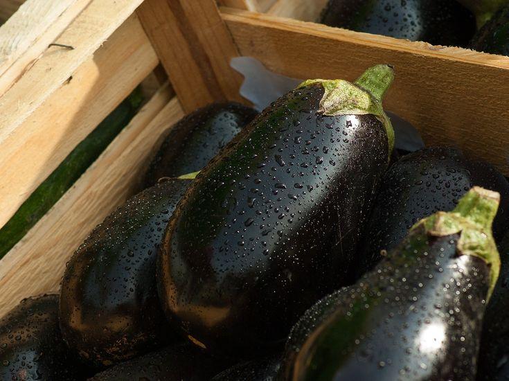 Aubergine: Tipps zu Anbau, Pflege und Verwendung