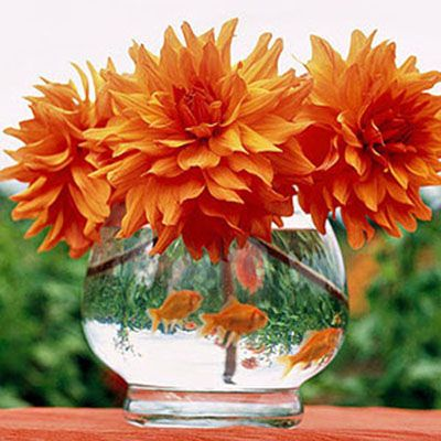 Gold Wedding Centerpieces on Goldfish   Dahlia Centerpiece  (The silly idea is growing on me... green glass pebbles on the bottom)