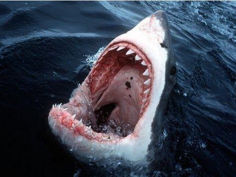 Haie an der Ostsee
