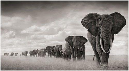 Mi fotografo favorito, Nick Brandt Este increíble fotógrafo de vida salvaje en blanco y negro utiliza sobre todo teleobjetivo y lentes de gran angular. Podríamos describir sus fotografías como: misteriosas, poderosas, íntimas, épicas y emocionantes