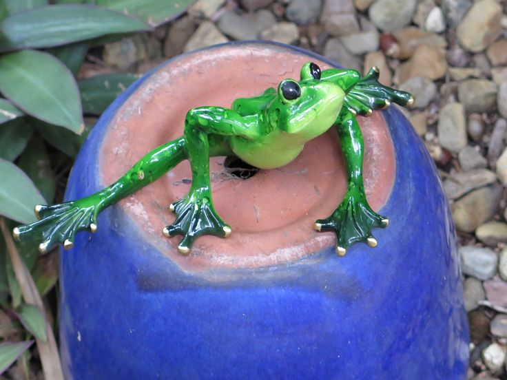 Plenty of Frogs here too. Live an Ornamental.