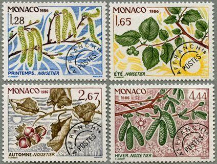 hazel nut tree, Monaco (1984)