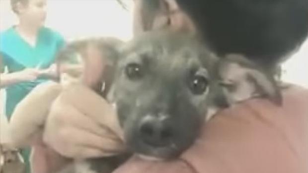 Así vive ahora el perro aterrorizado por las caricias humanas - Diario de  Torremolinos