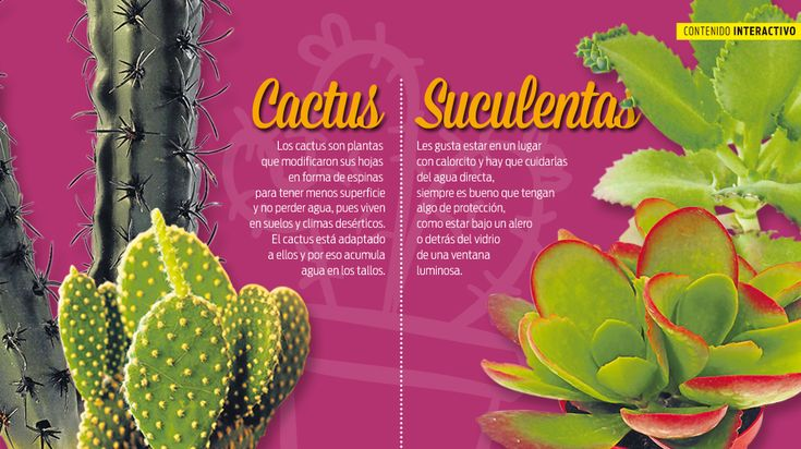 1000 ideias sobre tipos de suculentas no pinterest for Clases de cactus