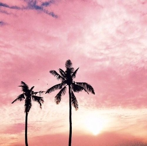 Pink sky and palm trees - it reminds me of Southern California and summer.