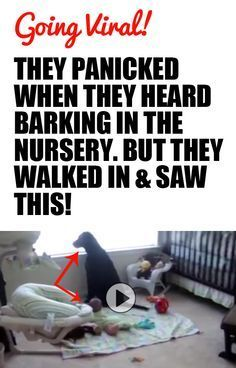 They Panicked When They Heard Barking In The Nursery. But They Walked In & Saw This!