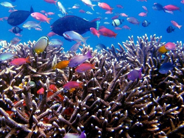 Raja Ampat - Coral Reefs