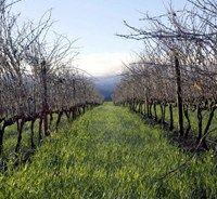 The Vineyards at Edgebaston in Stellenbosch.